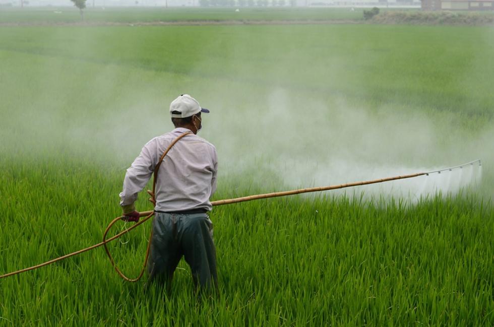Entre 2007 e 2017, foram registrados 29.472 casos de intoxicações acidentais por agrotóxicos no Brasil. Crédito: Pixabay