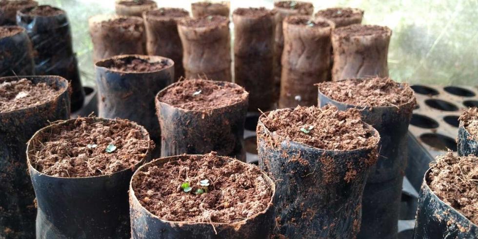 Foto Eco Xingu (UFPA Altamira)