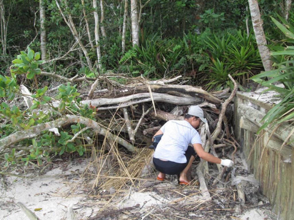 Equipe de Educação Ambiental da Administração dos Portos de Paranaguá e Antonina (Appa) promove limpeza das praias da Ilha do Mel. Foto: Najia Furlan/APPA