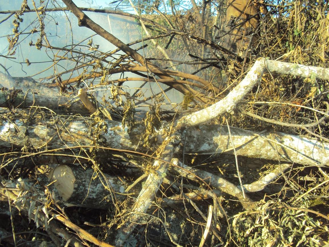 A fiscalização aconteceu em 29 de setembro e o proprietário foi multado em R$ 28 mil por desmatamento sem autorização de vegetação nativa em estado avançado de regeneração.
