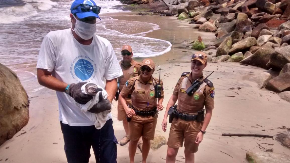 PM é acionada por pedestres e resgata pinguim ferido na Praia Mansa, em Matinhos (PR). Foto: Verão Paraná 2016/2017