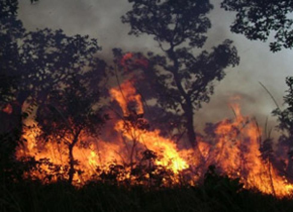 Estação mais seca facilita a ocorrência de queimadas no Cerrado – Foto: Agência Fapesp