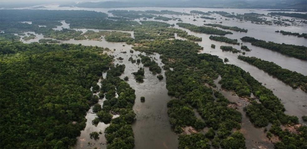 No inverno, a água atinge o topo das árvores da Amazônia – Foto: Folhapress
